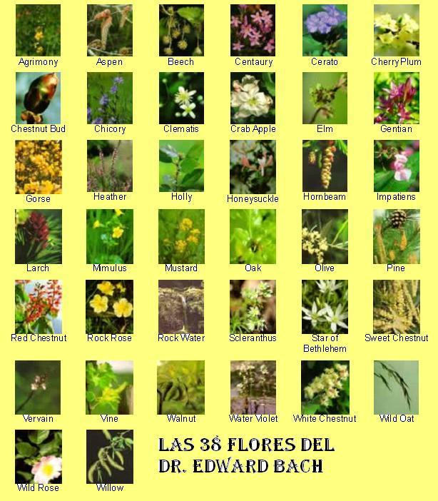 ... cuenta con 38 flores cada una de ellas asociadas a un estado de animo